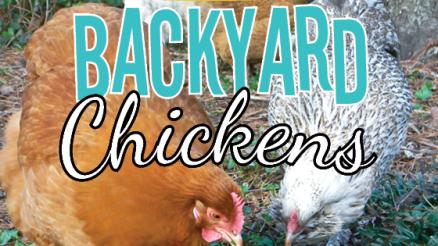 5-Benefits-of-Raising-Backyard-Chickens-pin