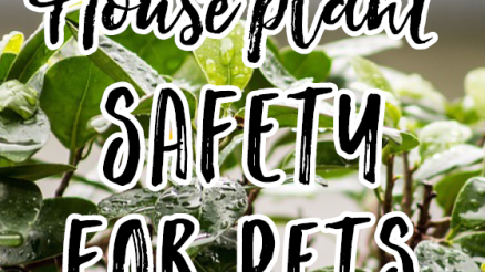 House-Plant-Safety-for-Pets_pin