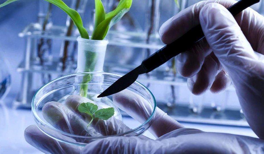Chemical Industry Lies About GMOs | Natural Health 365
