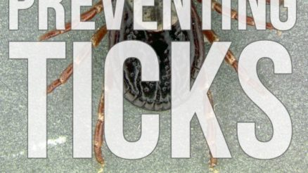 Preventing-Ticks-the-Natural-Way-560x560