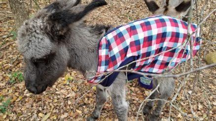 Baby-donkey-jacket-1-800