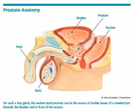 1 Introduction What Is The Prostate Sense Of Urgency